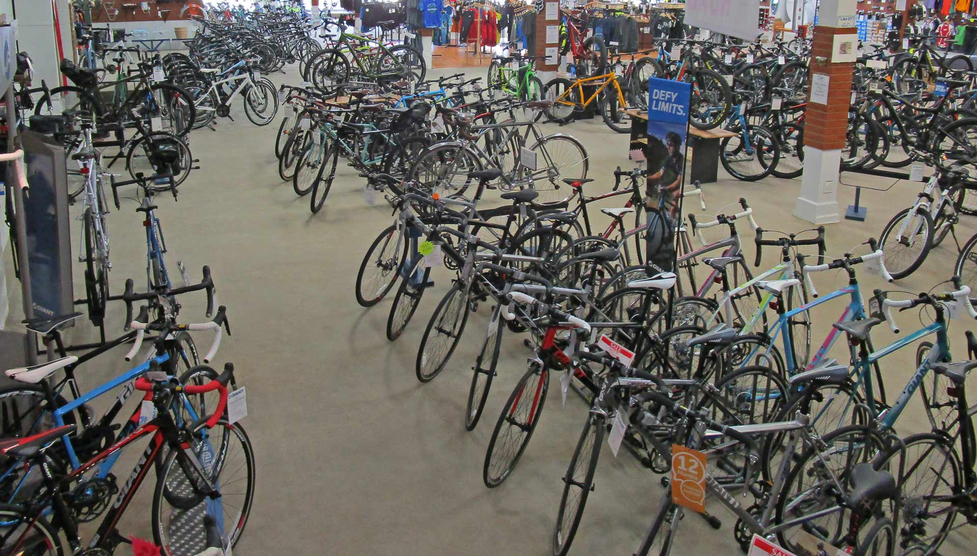 giant display of bikes at Indy Cycle Specialist